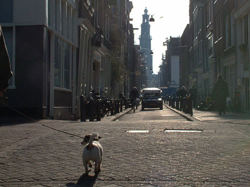 dog in the Tichelstraat in the Jordaan walking to Westertoren, Western Church in Amsterdam